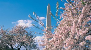 Washington Monument in Spring