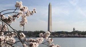 Washington Monument and the Tidal Basin