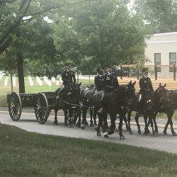 Horse and Caisson at Arlington